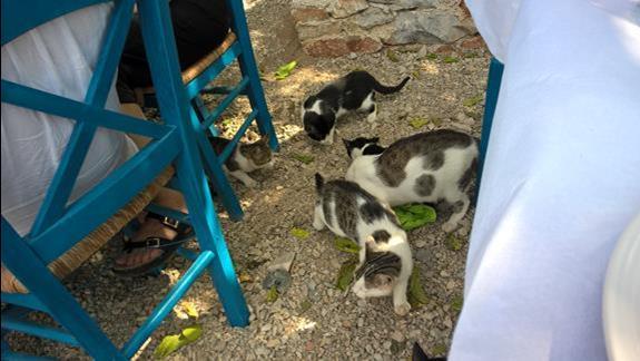 Wszedobylskie koty