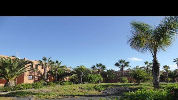 Ogród  w hotelu Oasis Papagayo