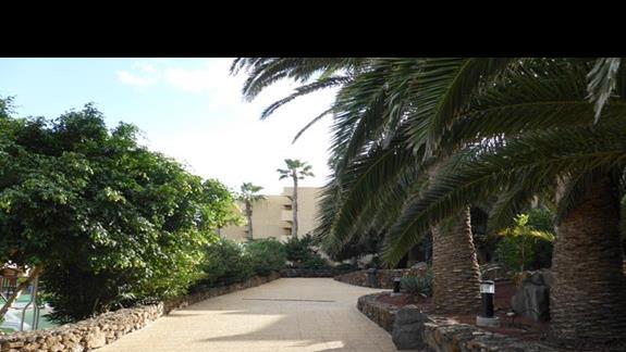 Ogród w hotelu Occidental Lanzarote