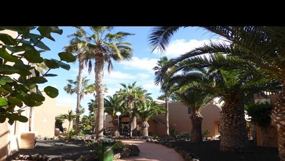 Ogród w hotelu Oasis Dunas