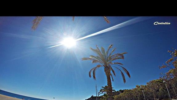 Plaza, promenada oraz rosnace wokól palmy