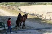 Hotel Il Parco Degli Ulivi - Il Parco Degli Ulivi - stadnina koni