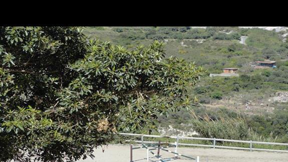 Il Parco Degli Ulivi - wybieg dla koni