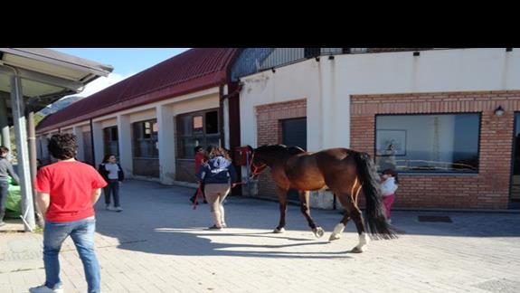Il Parco Degli Ulivi - stadnina koni