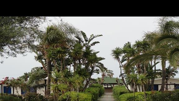 Le Dune Beach Club - ogród