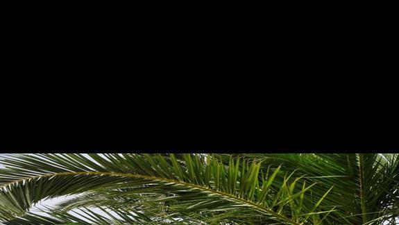 ogród w hotelu Iberostar Creta Panorama