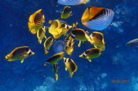 Hotel Otium Amphoras - zdjęcie przy rafie