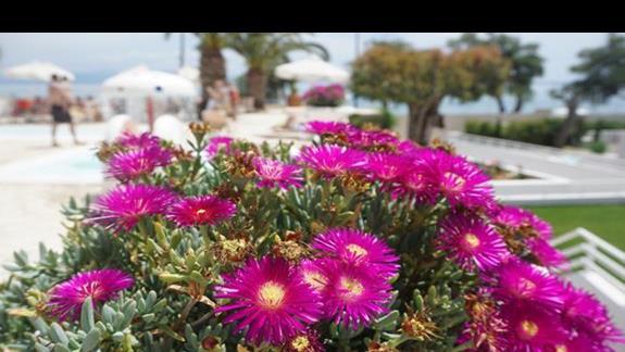 kwitnące kwiaty w ogrodzie