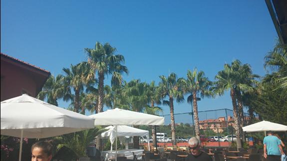 Cudowne palmy!