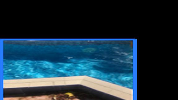 Śmietnik na basenach nie był sprzątany