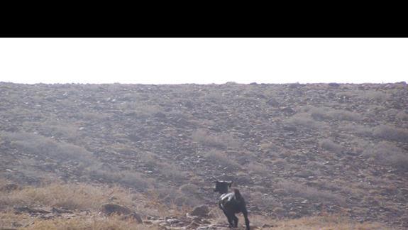 i kozy