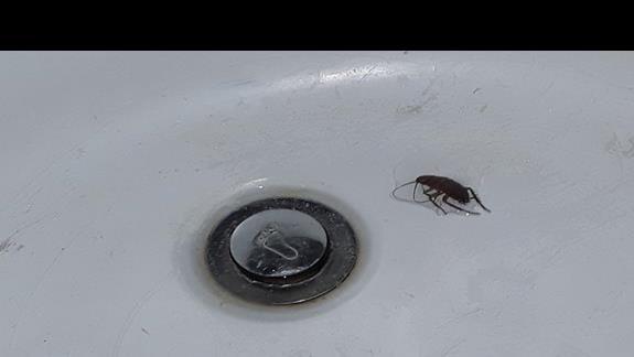napomkne ze karaluch mial okolo 4-5 cm i uprzatneli go po 27godz