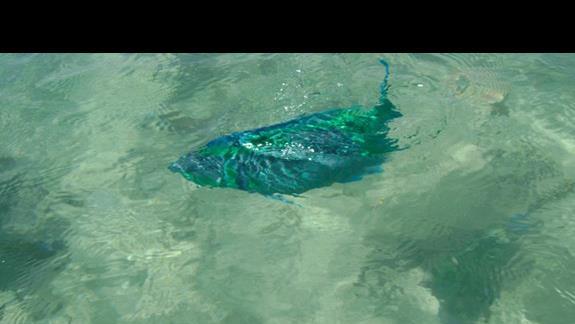 rafa przy -plaży