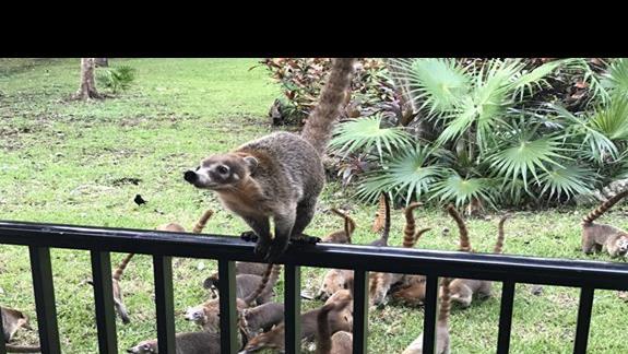 Nasi sąsiedzi - ostronosy 😉