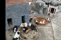 Hotel Park Club Europe - Świnki morskie w mini zoo